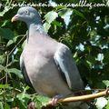 Les juvéniles se débrouillent, la vie d'oiseaux reprend ses droits!