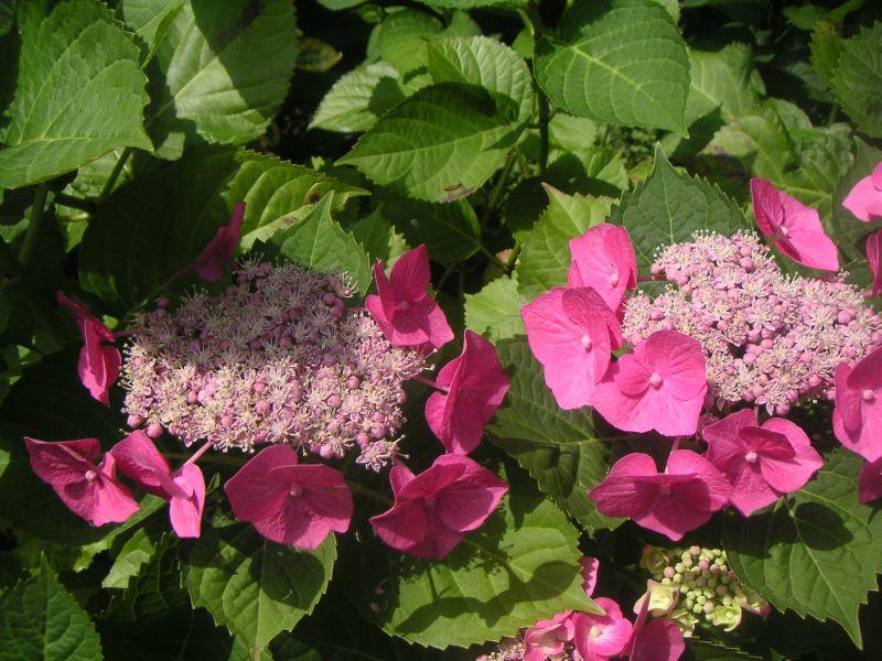 jardin) (3)