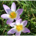 Le printemps arrive ..... au jardin