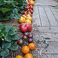 6 juillet - des tomates du potager....rouges, jaunes, brunes et orangées....