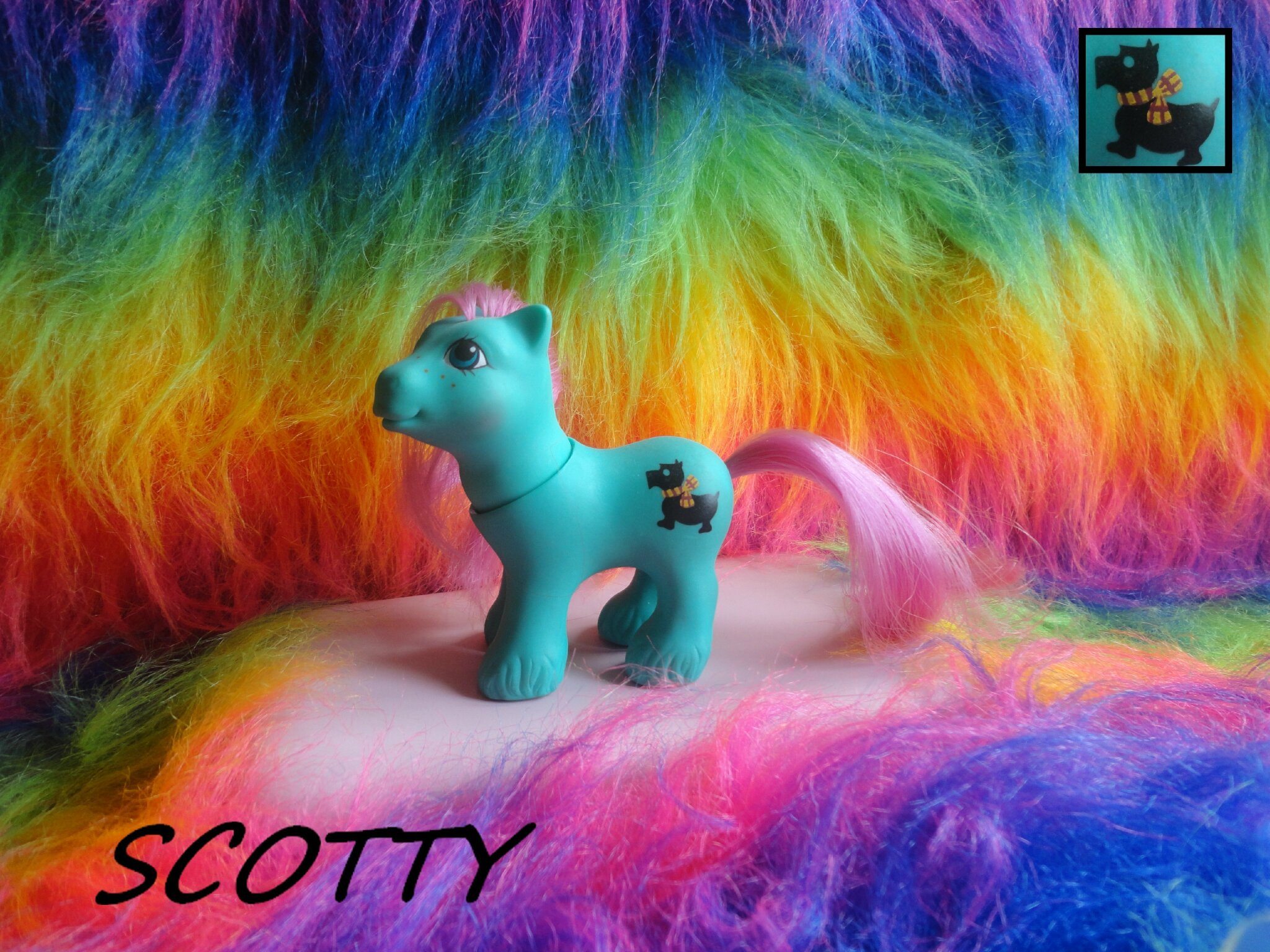 SCOTTY (Baby Paws)