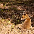 2014-05-30 LUX-1110