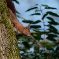 écureuil 5