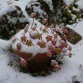 neige de janvier.2010