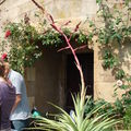 jardins botaniques 167