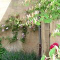 vieilles demeures fleuries