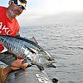 pêche aux thons rouge (30)