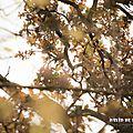 Poesie : l'automne (lucie delarue-mardrus)