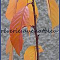 Concours feuilles d'automne