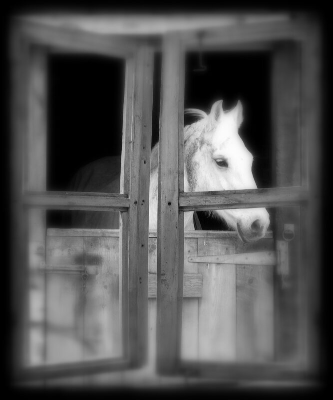 cheval2,
