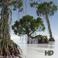 Dagobah mangrove tree