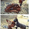 °oo fawn and the kitten oo°