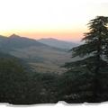 Les belles forêts d'algérie