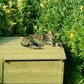 Et notre chat qui se délecte sur le composteur, au SOLEIL ! Quel veinard !