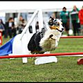 Concours Agility <b>Terres</b> <b>Froides</b> (38) - 27/10/2013