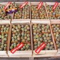 MOISSAC EXPORT FRUITS