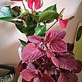 Bouquet <b>cadeau</b>