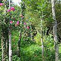 végétation baie de petit bôt