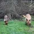 2009 04 13 Cacahuète et Kapy sur l'étangs