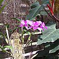 Orchidées de cuba