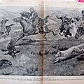 Chasse <b>aigle</b> contre renard 1914 illustration ancienne sp20
