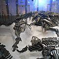 La découverte des iguanodons de bernissart