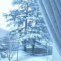La neige est au rendez-vous aussi chez moi !