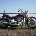 Softail springer 2001