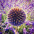 Apremont-sur-Allier, fleur (18)