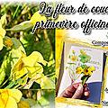 Fleurs de coucou ou primeveres officinales - bienfaits des primevères et recettes