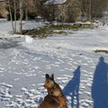 2009 01 13 Kapy qui va attraper une boule de neige
