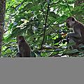 Jungle tre