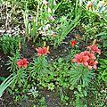 8-quelques fleurs du jardin