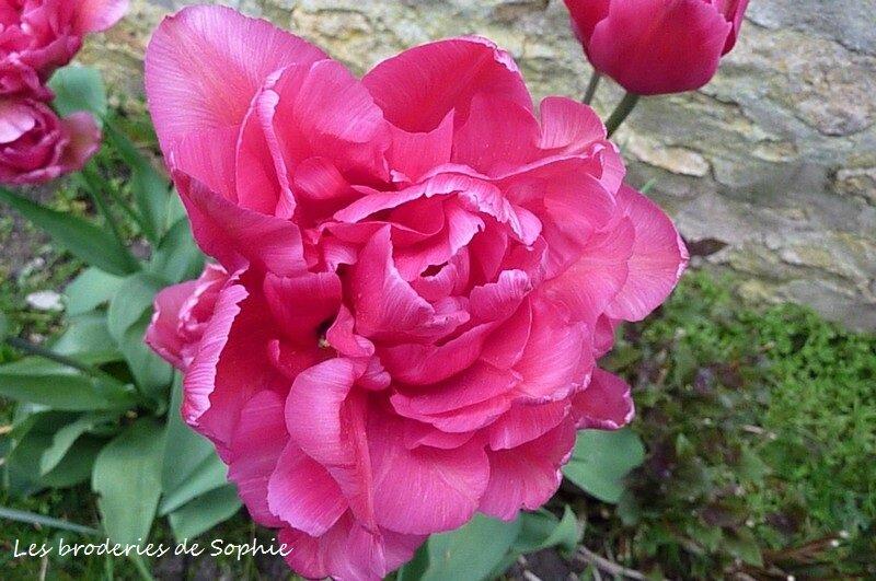 Jardin avril 2014 (15)