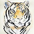 Aquarelle : le tigre