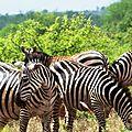 2-Sur la route d'Amboseli
