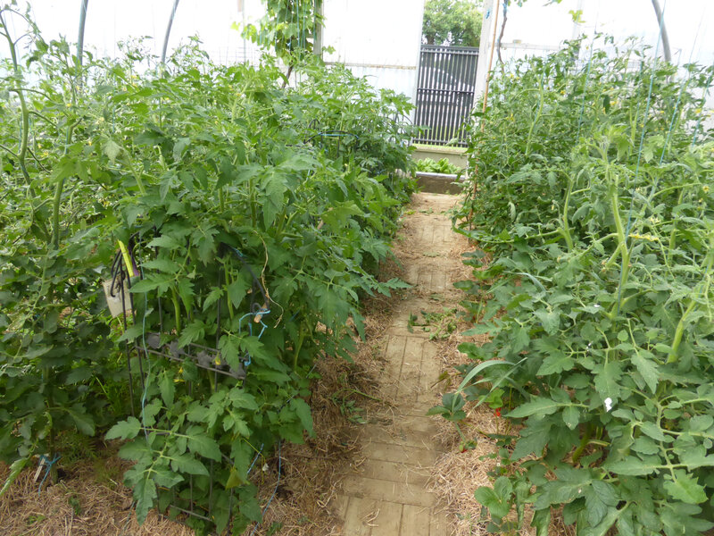28-tomates (1)