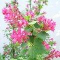 Jardin en rose