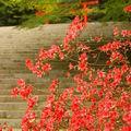 Parc national de kirishima