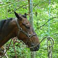 balade equestre gastronomique à La Lucerne d'Outremer (14)