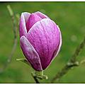 Le printemps au parc de rouelles