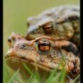 Réptiles et amphibiens