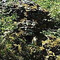 Toiture d'une gariotte fondue dans la nature