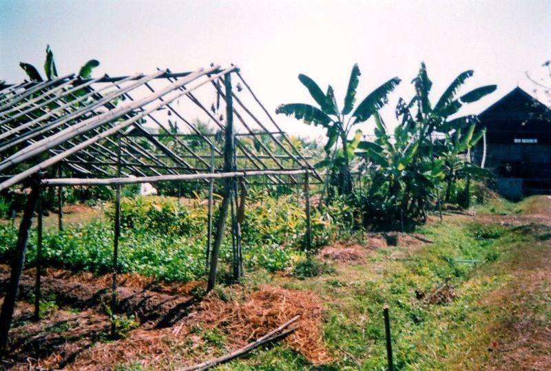 Chiang Maï Cooking farm