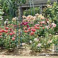 De la Rose