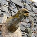 gargouille plaquée sur un mur à Usson