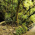 Ruakuri natural bridge et aranui cave - waïtomo