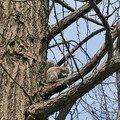 ... et aussi des écureuils !