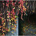 LES GAGNANTS pour le cirque <b>Arlette</b> <b>Gruss</b> et quelques photos d'automne pour ceux qui aiment mes clichés.........