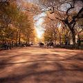 6x6 central park